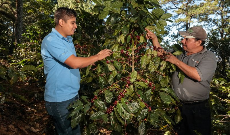 PRO-A: Peru Coffee Tour: Explore Coffee Production in Scenic El Palto