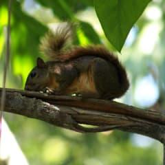 Costa Rica rainforest wildlife