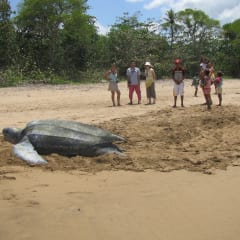 Playa Blanca Beach - sea turtle rescue