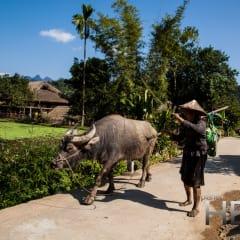 Vietnam homestay village
