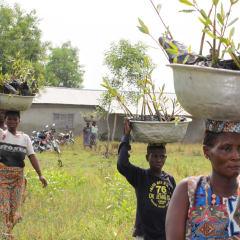 Eco farm medicinal plants