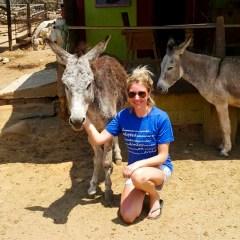 donkey tours
