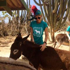Donkey Sanctuary Aruba