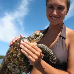 protect sea turtles - Playa Blanca Beach