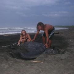 sea turtle rescue - LAST Costa Rica