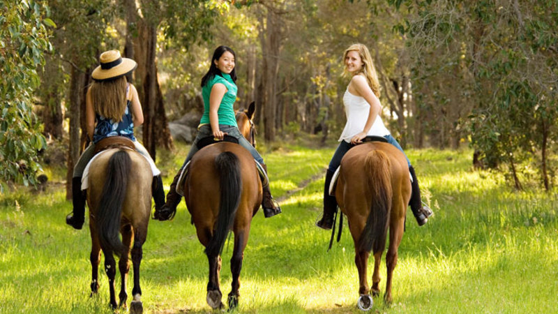 Image result for horse riding