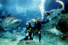 Shark Diving at Melbourne Aquarium - Non Certified - Weekday