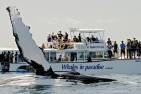 Whale Watching Half Day Cruise - Adult - Surfers Paradise
