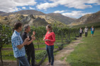 Scenic Winery Tour and Tastings