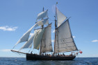 Tall Ship Sailing Adventure With Lunch - Adult