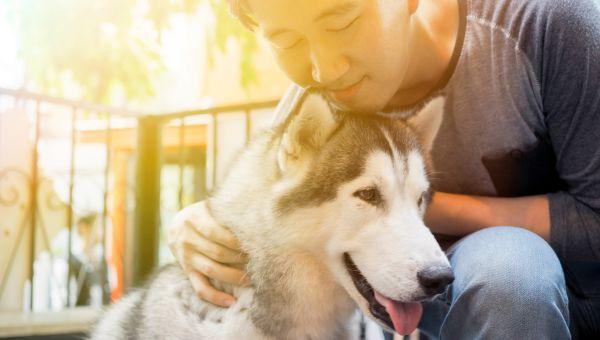 Pets give you a sense of purpose
