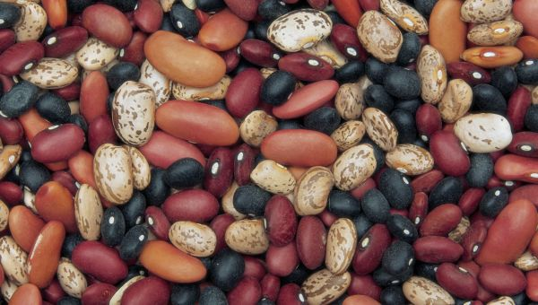 Eat More Beans, Lose Weight
