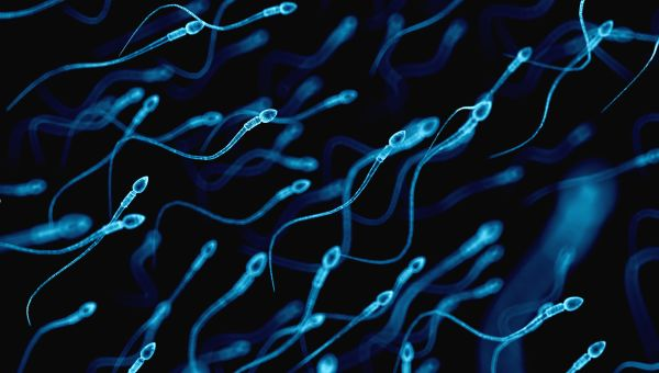 Unhealthy sperm or low sperm count