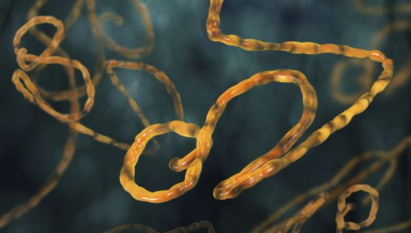 What to Worry About (and Not) When it Comes to Ebola