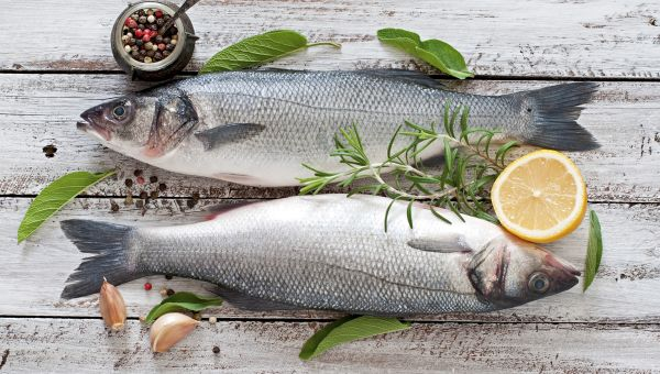 The Brainy Benefits of Fish