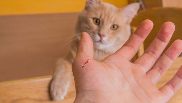 Cat Scratch Dangers