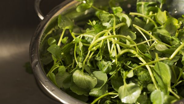 The Leafy Green That's Great for Breasts