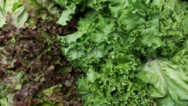 Eat More Leafy Greens to Protect Your Cognitive Health