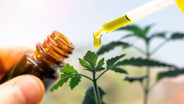 Marijuana for Pain: Hype or Hope?