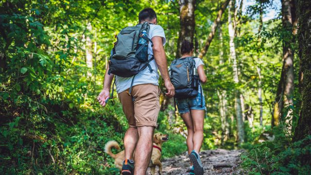 Lyme Disease, Ticks and COVID-19: How to Stay Safe This Summer