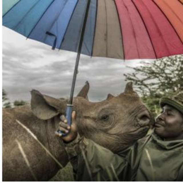 National Geographic Live presents Rhinos, Rickshaws, and Revolutions