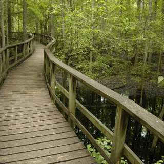 Carolina Hike Series: Congaree Swamp National Park, SC