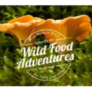 A Wild Food Foraging Adventure