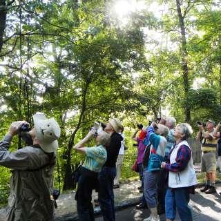 Naturalist Niche: Spring Early Bird Walk