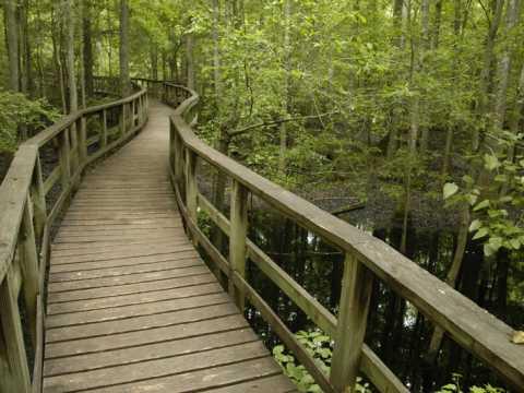 Carolina Hike Series: Congaree Swamp National Park, SC