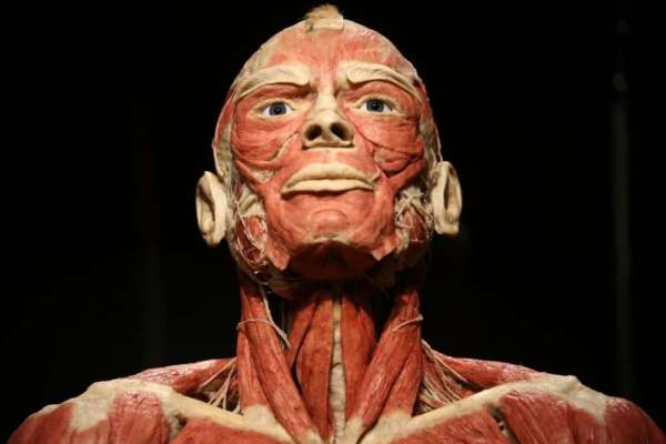Body Worlds RX