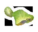 Island Maui