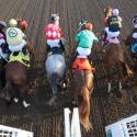 Auto & Horse racing photo