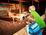 Wild Wonderland at Tampa's Lowry Park Zoo
