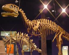 Dinosaur Delaware Museum of Natural History