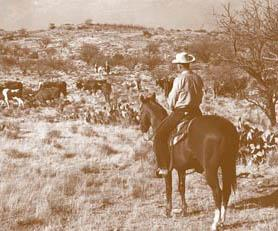 FW History Cattle