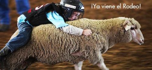 Kid Riding Sheep at the Houston Rodeo