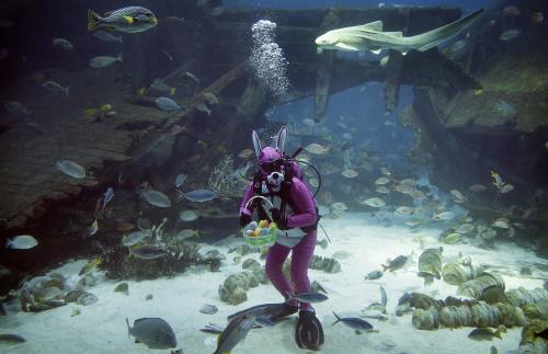 Easter Bunny Florida Aquarium