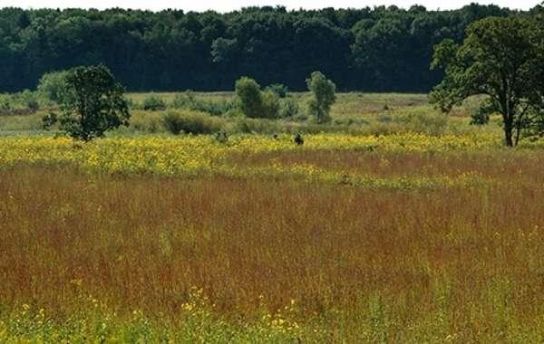 UW-Madison Arboretum Walk: Curtis Prairie.