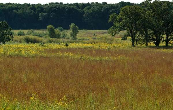 UW-Madison Arboretum Walk: Looking for the Green.