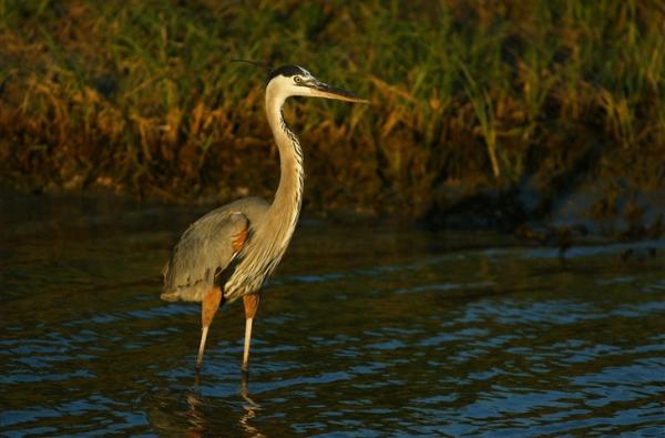 Birding in Beaumont, Texas