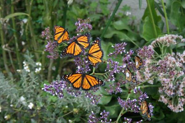 the Butterfly Garden