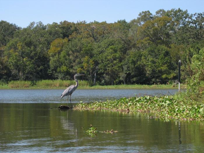 armand bayou