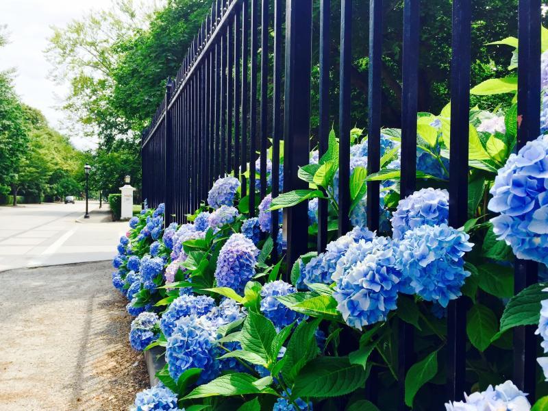 Bellevue Avenue Spring
