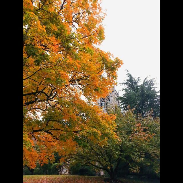 Fall Leaves South Roanoke - Fall Photo