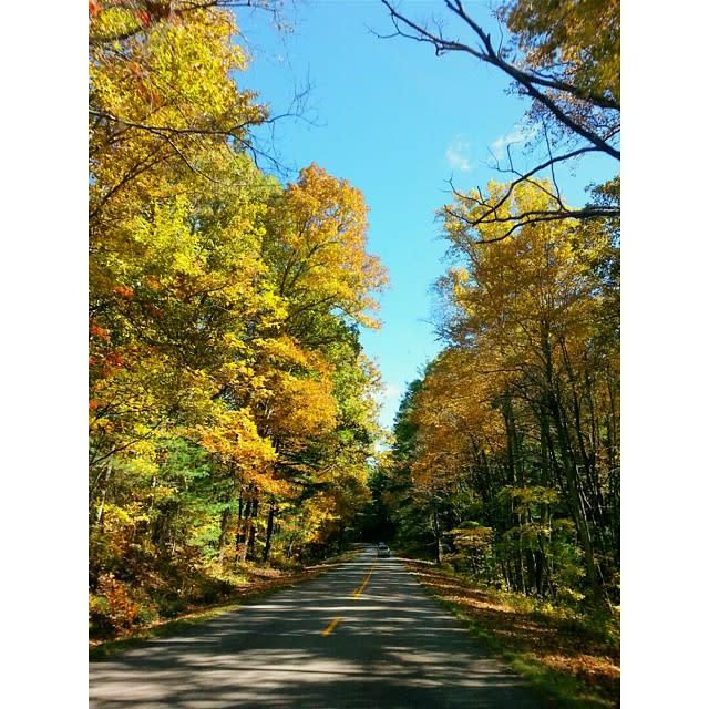 Fall on Blue Ridge Parkway - Fall Photo