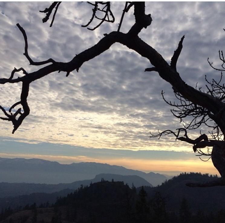 Silhouette of Tree while Hiking