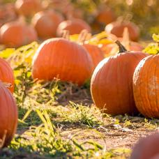 20 Fall Festivals & Events