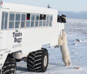 Winter Northern Safari