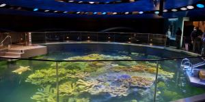 Giant Ocean Tank at the New England Aquarium