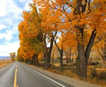 Fall Colors in Coleville on US 395